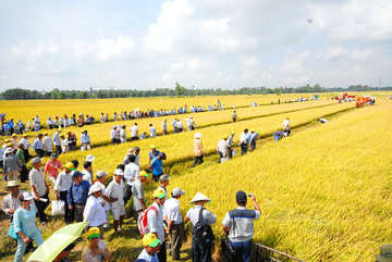 Large-scale fields underdeveloped due to lack of capital