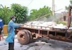 African swine fever keeps spreading in Vietnam