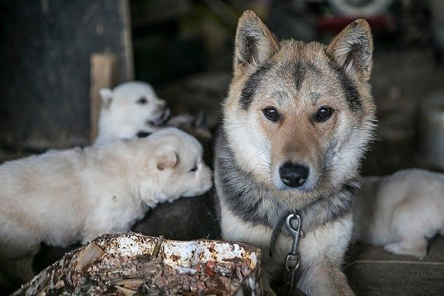Khu chợ thịt chó nổi tiếng chính thức đóng cửa