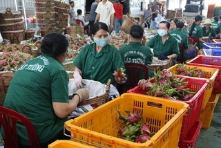 Vietnam trade authority to take flexible trade policy to support exports