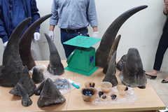 Wildlife trafficking increases in Vietnam as demand continues to rise