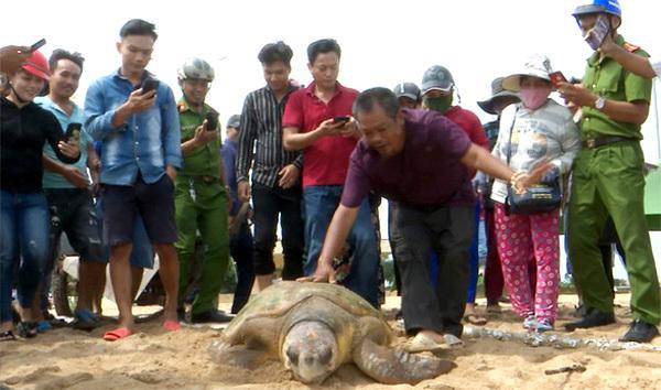 Man saves turtles' lives