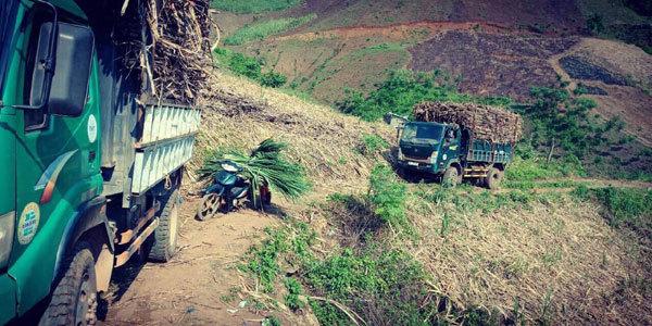 Gần 100 triệu người tiêu dùng Việt Nam sẽ được mua đường giá đắt hay rẻ?