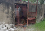 Tiger victim was taunting animal: Officials