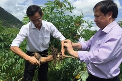 VN's agricultural products face barriers to enter Chinese market