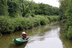 Kien Giang recovers protective forests
