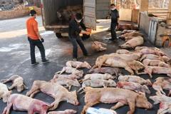 Dùng cả quỹ nâng lương vẫn không đủ cứu nông dân vì dịch tả lợn
