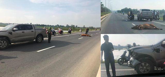 Ô tô đâm chết gia súc trên đường, ai phải chịu trách nhiệm?