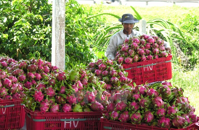 vietnam fruit,fruit export,vietnam economy,Vietnam business news