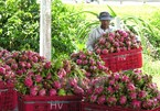 Over 10 of Vietnamese key farm produce sold abroad