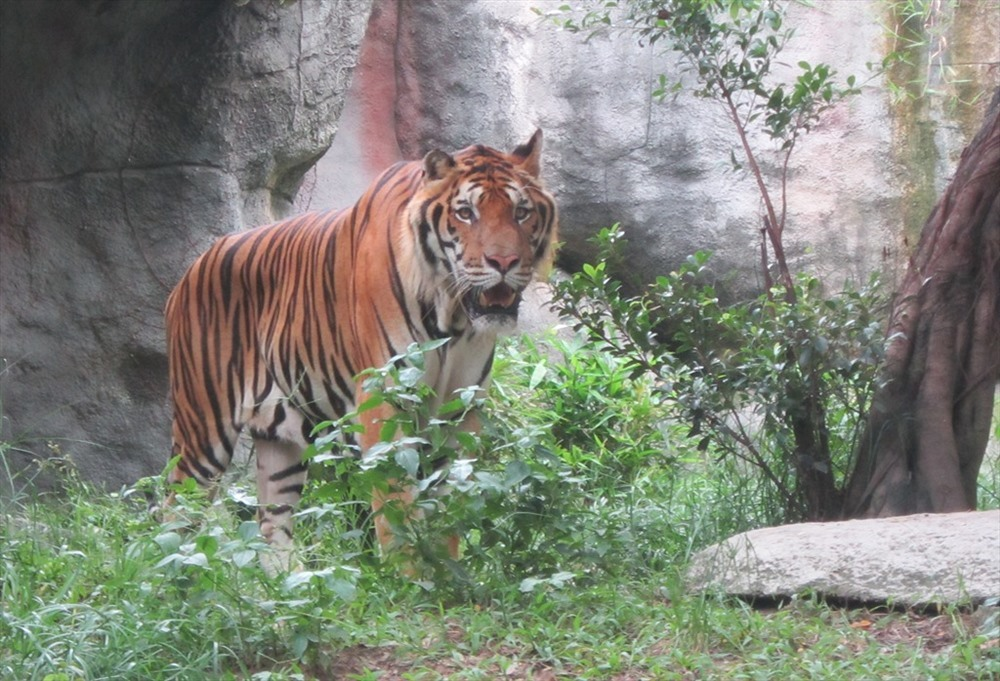 Experts point to tiger keeping failings