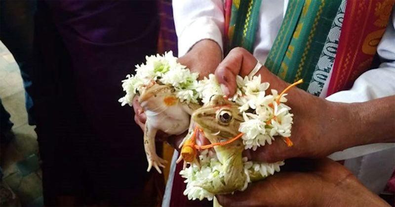 Bắt ếch cưới nhau để cầu mưa
