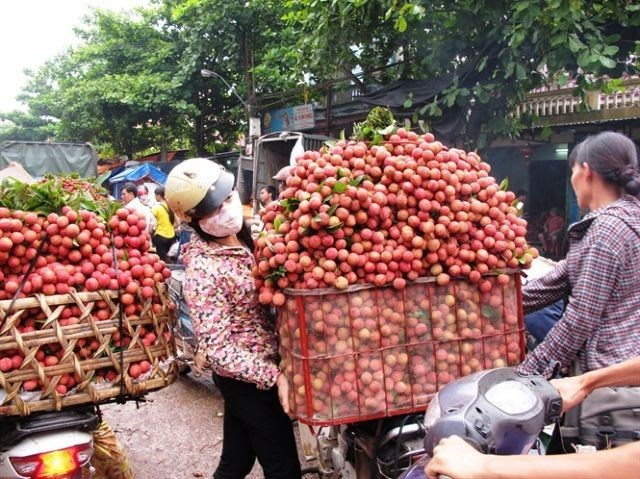 vietnam lychees,vietnam fruit export,vietnam economy,Vietnam business news,business news