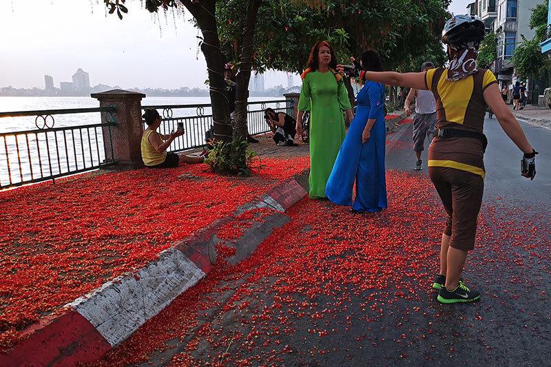 Ngôn tình U70 trên thảm hoa rực đỏ ven hồ Tây