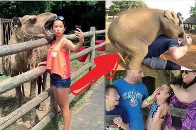 Những vụ động vật tấn công khiến con người vừa buồn cười, vừa sợ