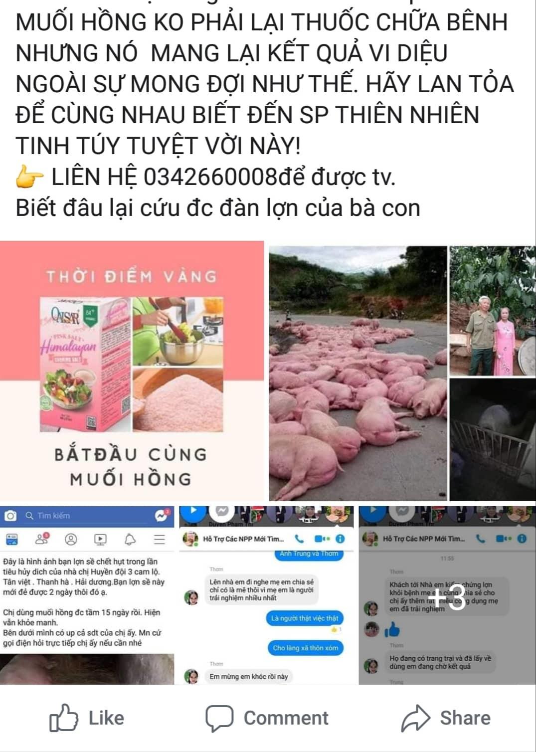 Thông tin muối hồng chữa được bệnh dịch tả lợn châu Phi là bịa đặt