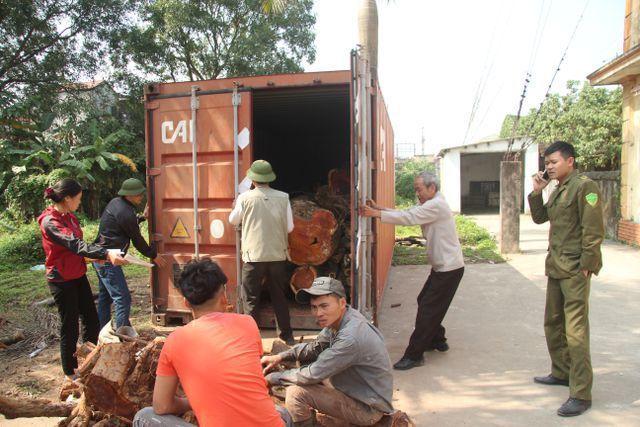 Sắp bán đấu giá hơn 5 tấn gỗ 'sưa trăm tỷ'