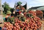 """Bắc Giang xin Thủ tướng tạo """"làn xanh"""" khi tiêu thụ vải thiều"""