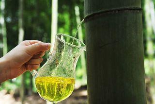Làm rượu từ ống tre siêu độc đáo của người Trung Quốc