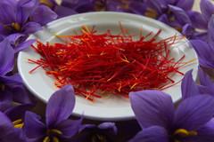 Hơn 10.000 USD/kg, vì sao saffron là gia vị đắt nhất thế giới?