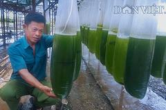 Chuyện lạ Thái Bình, chế ngàn lít nước xanh lè, rót bán hàng tỷ đồng