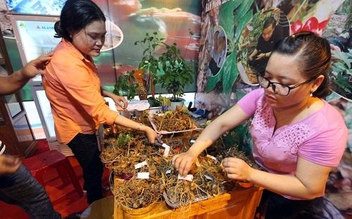 Quảng Nam: Lo lắng cạn kiệt nguồn giống sâm Ngọc Linh