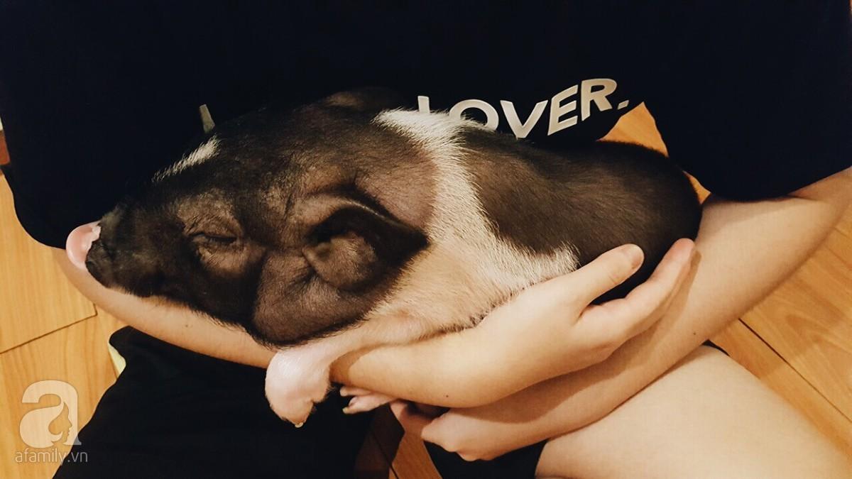 chăn nuôi lợn,thú cưng