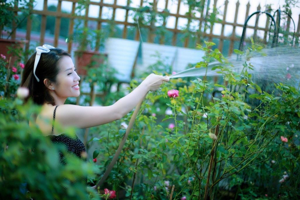 vườn hồng,hoa hồng,trồng hoa hồng