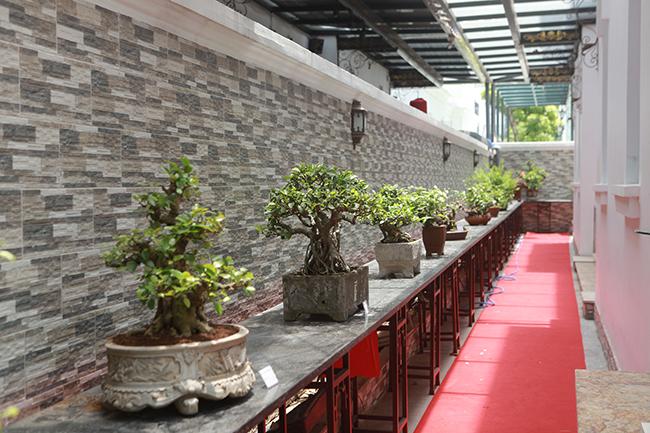 Bộ sưu tập bonsai tiền tỷ và 'đồ chơi VIP' của giới nhà giàu Việt