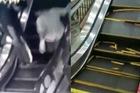 Hãi hùng thang máy sập dưới chân người mua sắm