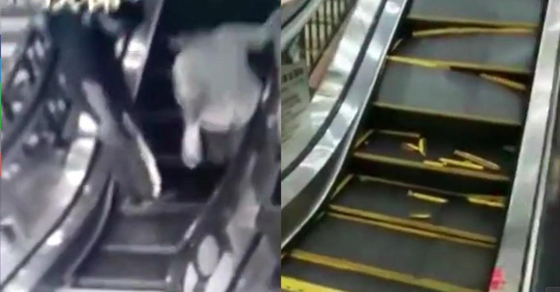 thang máy,Trung Quốc,tai nạn