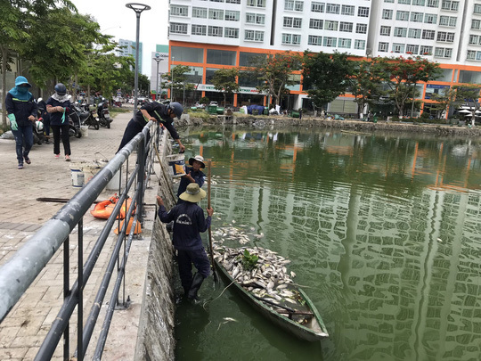 Mass fish deaths found at Da Nang lakes