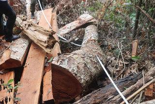 Bac Kan to prosecute deforestation culprits