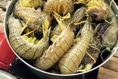 Dân Cà Mau nuôi loài tôm hung dữ cực ngon nhưng không dám nướng ăn