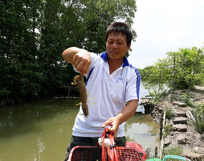 Anh Vũ Văn Hiện, ấp Nà Chim, xã Lâm Hải, huyện Năm Căn (Cà Mau) là 1 trong những hộ đầu tiên áp dụng mô hình nuôi tôm tích trong lồng nhựa.