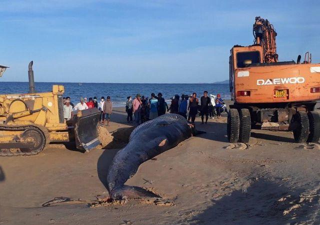 Two-tonne whale found dead on Khanh Hoa beach