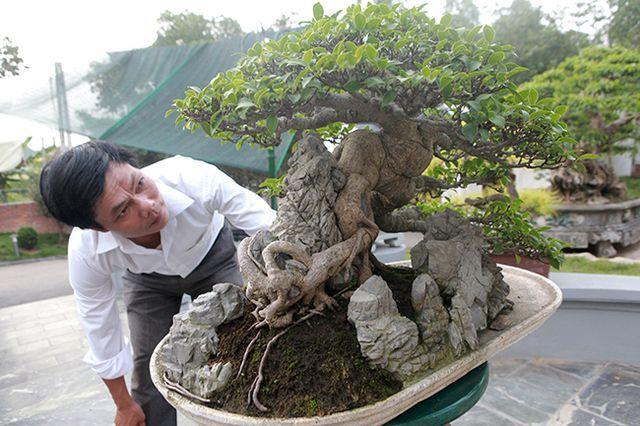 Mê mẩn ngắm 'cụ' si tai chuột đẹp nhất Việt Nam, giá 300 triệu