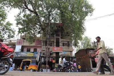 Cận cảnh cây đại thụ 'xuyên thủng' ngôi nhà 4 tầng