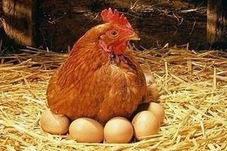 Clip nông dân 'trộm' trứng gà gây bão mạng xã hội