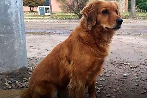 Chuyện cảm động về cún cưng đợi chủ hơn một năm ngoài đồn cảnh sát