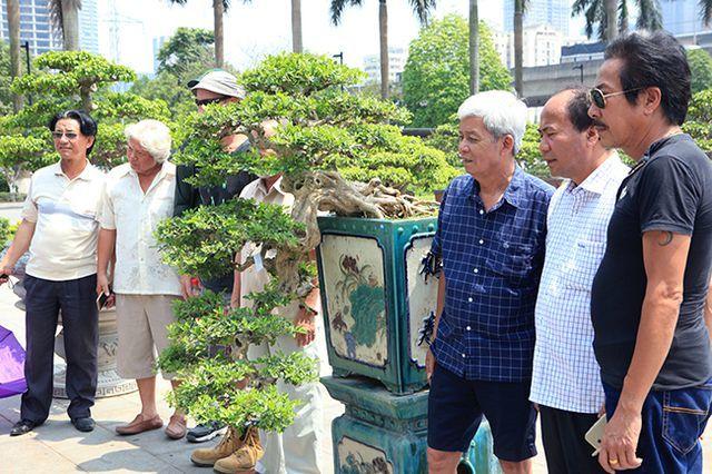 Siêu phẩm nguyệt quế cổ thụ dáng thác đổ đẹp nhất Việt Nam giá tiền tỷ