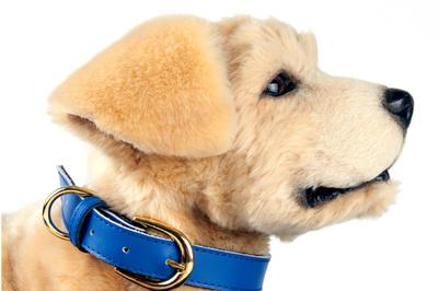 Robot động vật hỗ trợ cảm xúc giúp con người giảm stress