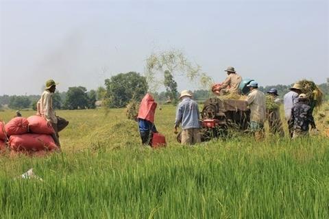 Rice exports,vietnam economy,Vietnam business news,business news,vietnamnet bridge,english news,Vietnam news