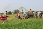 Rice exports face tough time amid huge global supply