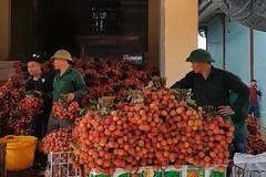 'Luật ngầm' của thương lái thu mua vải ở Bắc Giang
