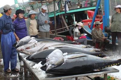 Cá Việt 37 triệu cá Nhật 70 tỷ, dân ta bao giờ mới giàu