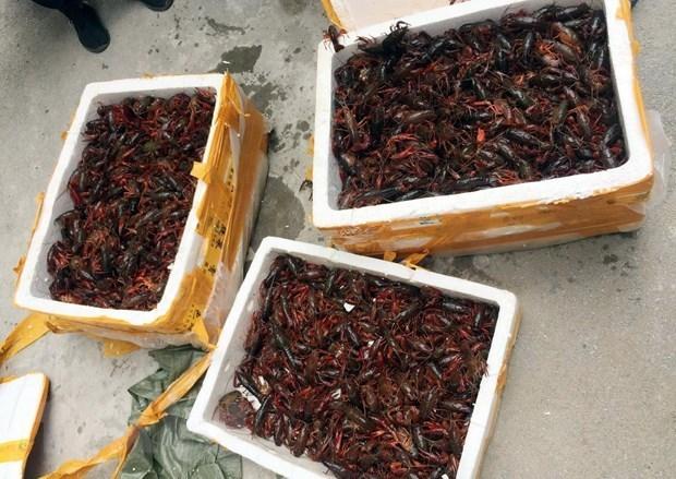 Prompt actions urged to control invasive alien species in Vietnam