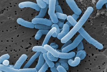 Tìm hiều về Probiotic Lactobacillus trợ lực hàng đầu cho phụ nữ mang thai và trẻ nhỏ