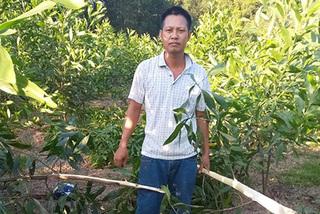 Hơn 3.000 cây keo rào lưới B40 ở Nghệ An vẫn bị kẻ xấu chặt sát gốc