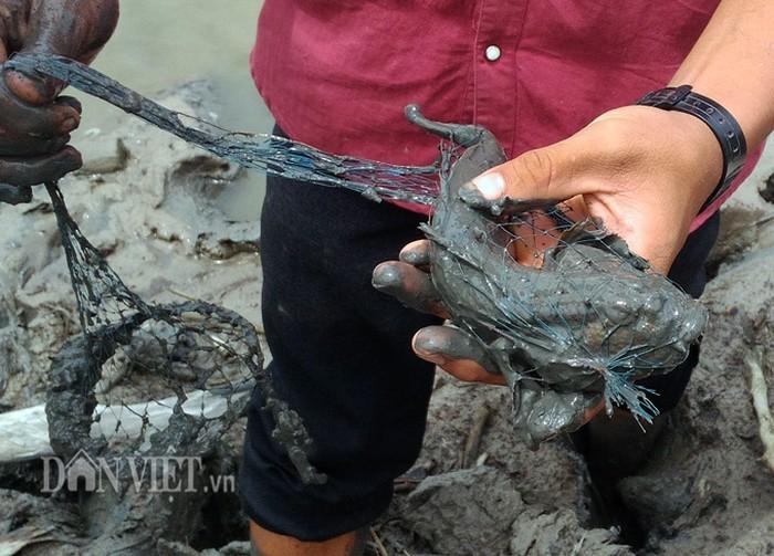'Săn' loài cá kỳ lạ nhất hành tinh: Vừa biết lặn vừa biết leo cây